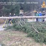 soraga danni per vento forte ph vigili del fuoco volontari4