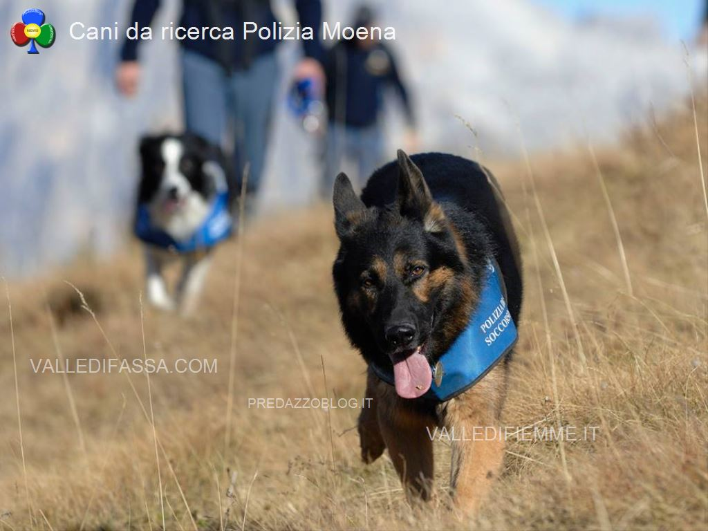 cani da ricerca polizia moena fassa4