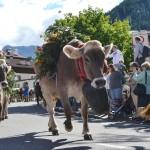 """Doppia discesa dai pascoli per il """"Festival del Puzzone"""""""