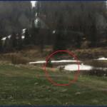 Avvistato il lupo al Passo San Pellegrino