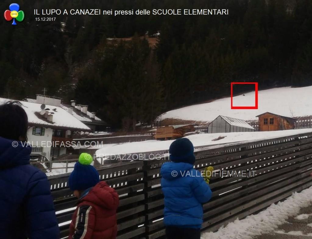 avvistamento lupo canazei valle di fassa scuole elementari2